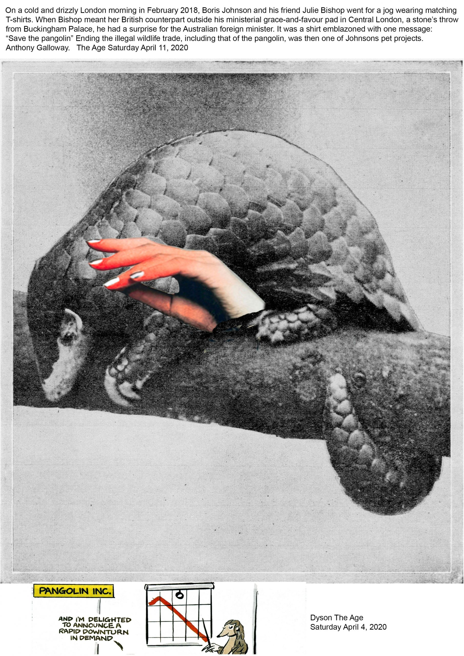 (44) Viki Petherbridge - Animals in armour. The pangolin: May they suffer no more. Image